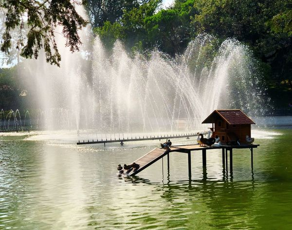 Water Nature Plant Tree Architecture Splashing Beauty In Nature Motion Lake Irrigation Equipment Occupation Waterfront Day Outdoors