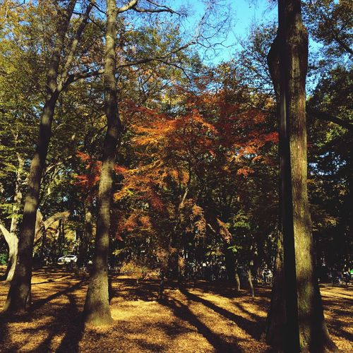 Park EyeEm Nature Lover Tokyo,Japan