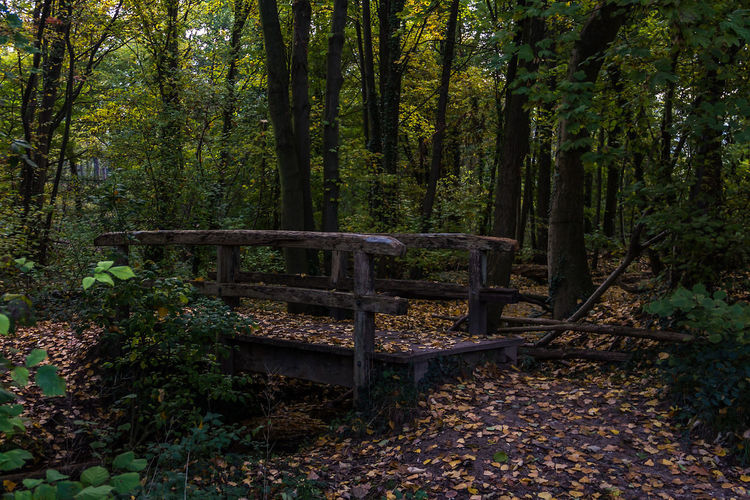 Wooden Bridge Autumn Beauty In Nature Bridge Day Forest Growth Landscape Leaf Nature No People Outdoors Scenics Tranquil Scene Tranquility Tree Tree Trunk WoodLand