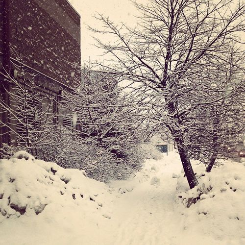 Snow sure is Pretty today.... Monday