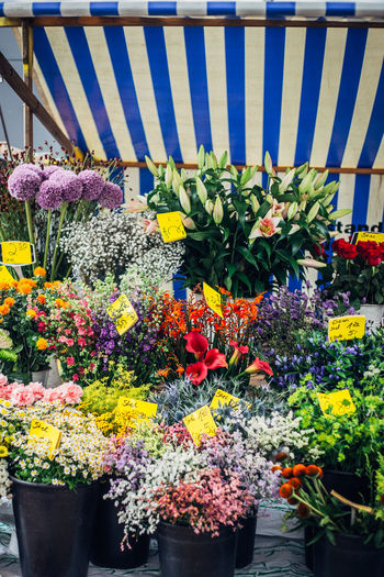 flower stall at market Market Close-up Day Flower Flower Shop Flower Stall Flowers Fragility Freshness Growth Market Stall Multi Colored Nature No People Outdoors Plant Potted Plant Purple Variation Yellow