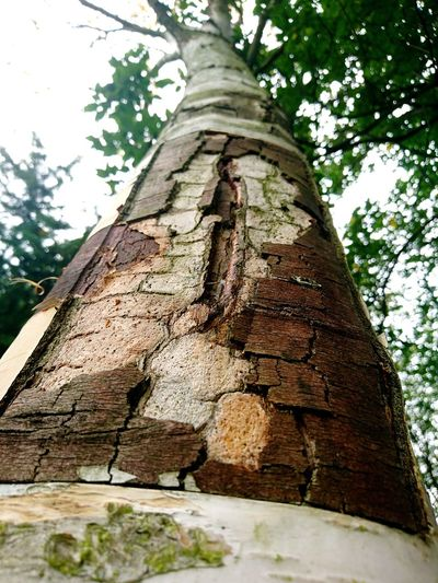Tree Tree Trunk Low Angle View Nature Day Outdoors No People Travel Destinations Ancient Built Structure Growth Beauty In Nature Architecture Sky Ancient Civilization Close-up