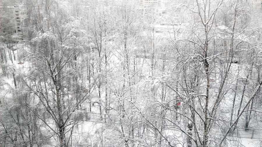 Winter Window Fantastic White Gourgeous