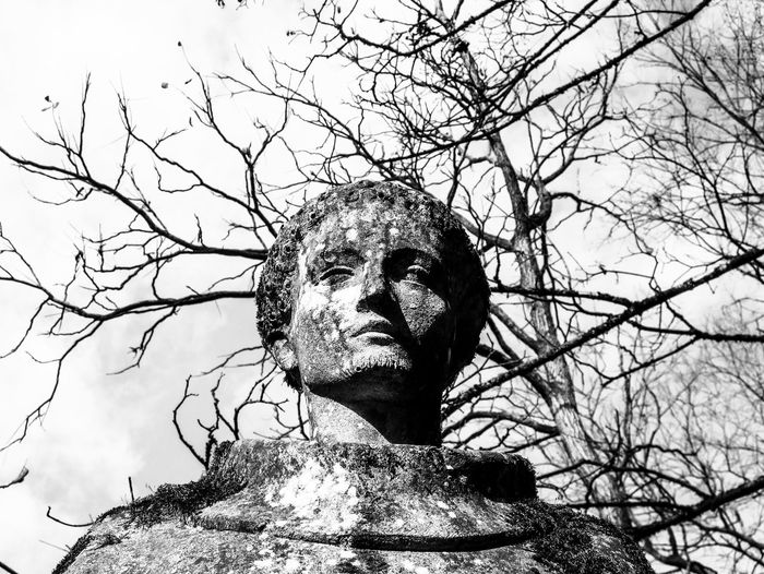Low angle view of statue against bare tree