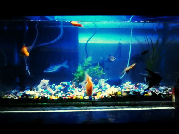 My fishes ..... First Eyeem Photo