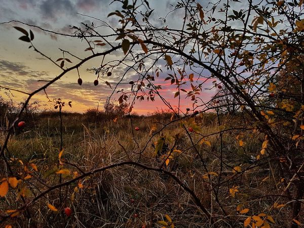 Beauty In Nature Fall Urban Nature Autumn Autumn Beauty Fall Beauty Sky And Clouds Dramatic Sky Evening Sun Evening Sky Evening Mood Tree Sunset Sky Close-up Foreground Autumn Collection Atmospheric Mood Romantic Sky Lightning