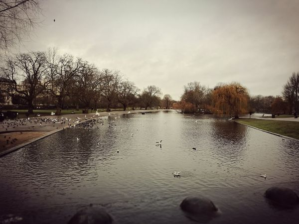 REGENTS PARK - Outdoors Nature Water Tree No People Hello World Huawei P9 Plus London Regents Park