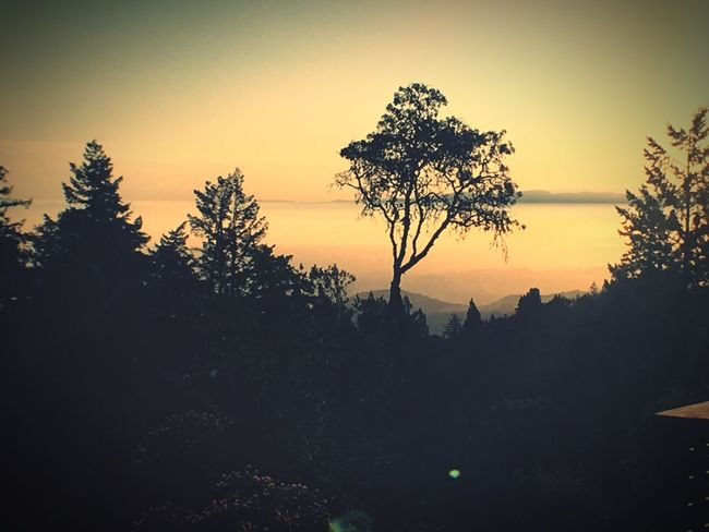 Tree Nature Silhouette Tranquility Beauty In Nature Sunset Tranquil Scene Scenics Landscape No People Outdoors Sky Forest Growth Clear Sky Day Sunrise Sunrise Silhouette Paint The Town Yellow