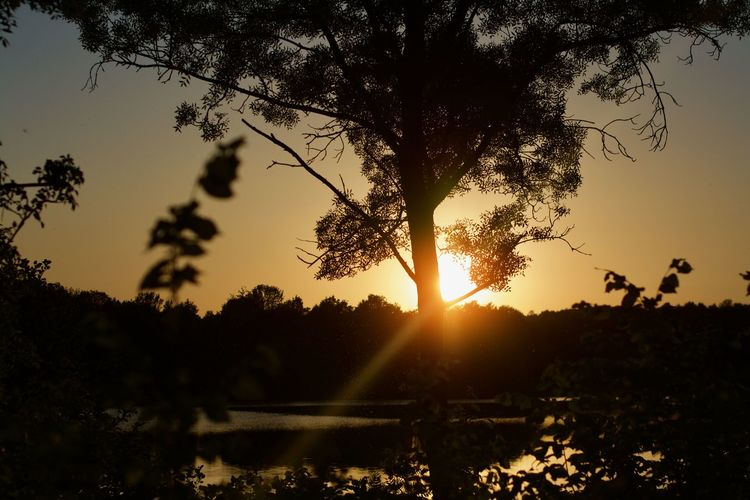 Landscape_Collection Sunset_collection Beauty In Nature Growth Idyllic Landscape Lens Flare Nature No People Non-urban Scene Orange Color Outdoors Plant Scenics - Nature Silhouette Sky Sun Sunbeam Sunlight Sunset Tranquil Scene Tranquility Tree