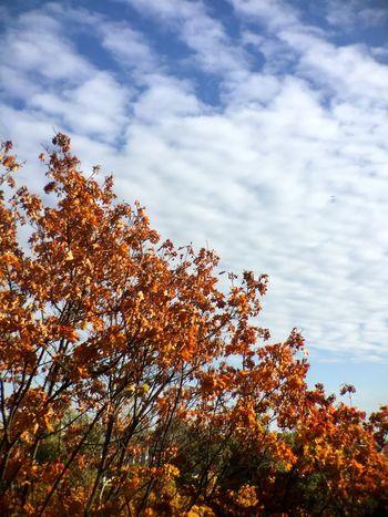 Autumn Autumn Colors Autumn Leaves Fall Beauty Fall Trees Nature