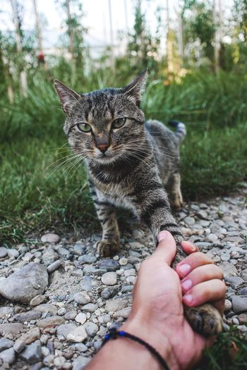 Close-up of hand holding cat on stone wall