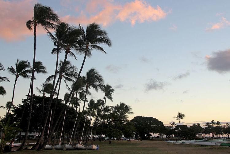 Beach Beauty In Nature Day Hawaii Nature Oahu Outdoors Palm Tree Sea Sky Tree WaianaeCoast Water
