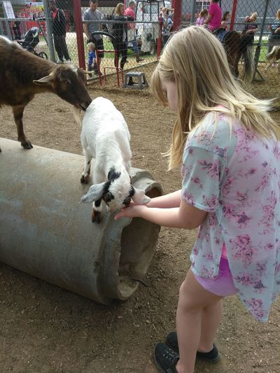 Domestic Animals Pets Animal Themes Mammal Outdoors Childhood Petting Zoo Livestock Zoo Agriculture Animal