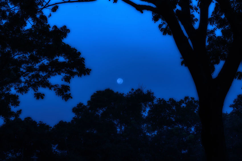 A moonlit Night! Trees Trees And Sky Tree_collection  Moon Moonlight Moon Light Moon Shots Moonshine EyeEm Nature Lover