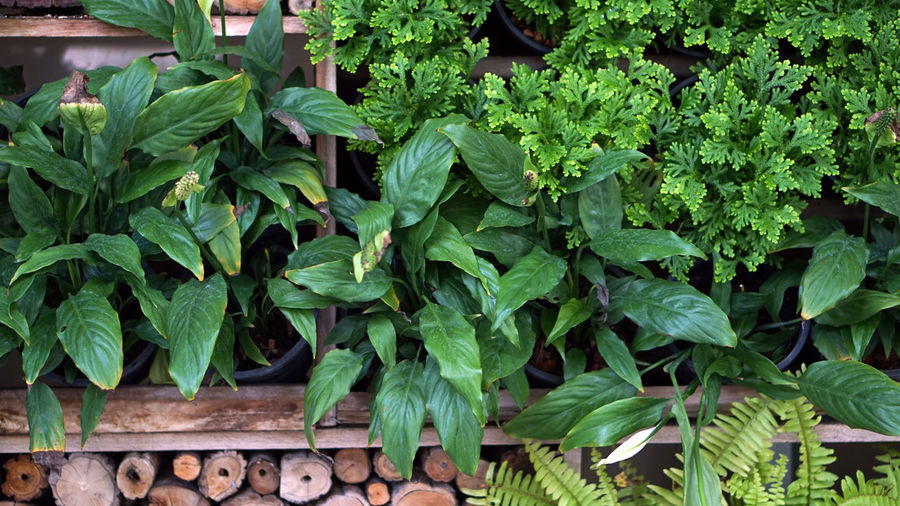 Garden Vertical Green Wall Nature Plant Design Texture Pattern Autumn Background Tree Leaf Floral Growth Gardening Pot Decoration Plants Beautiful Vegetable Gardens Environment Organic Farming Architecture Natural Decorative Landscape Outdoor Greenwall Home Log Trunk Wood Brown