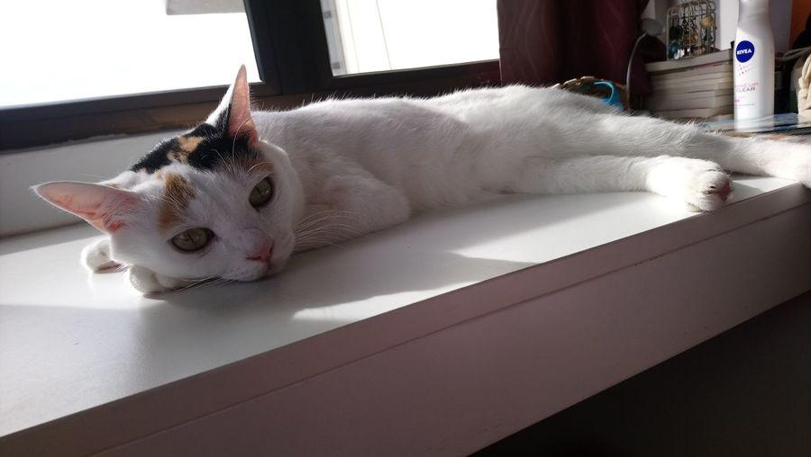 Cat Day Indoors