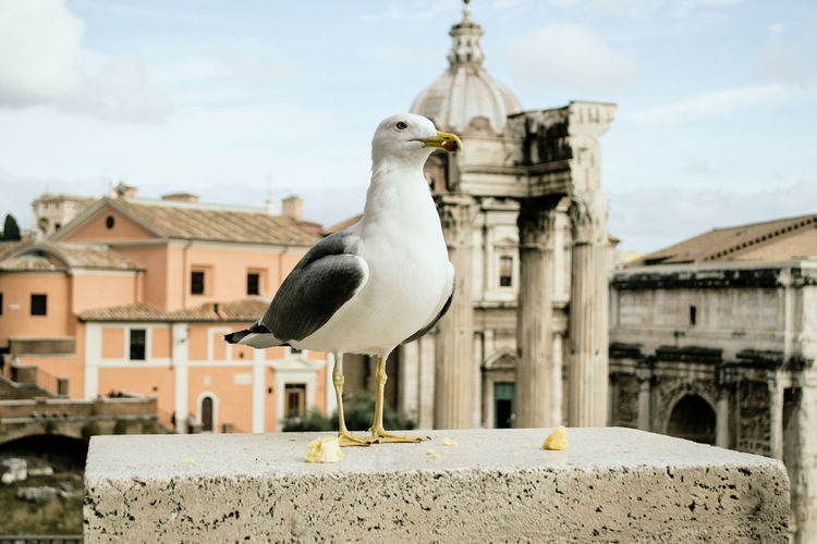 Rome Rome Italy Europe Trip Antiquity Ruins Ruins Architecture History Architecture Building Exterior Built Structure Bird Animal Themes Animal Vertebrate Animals In The Wild One Animal Animal Wildlife Building Focus On Foreground Day Outdoors No People Seagull Nature