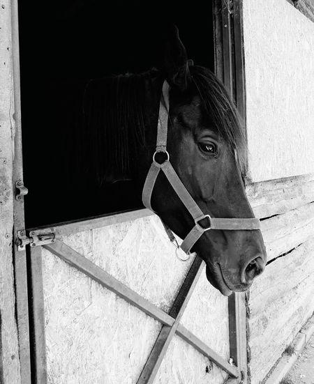 Horse Close-up