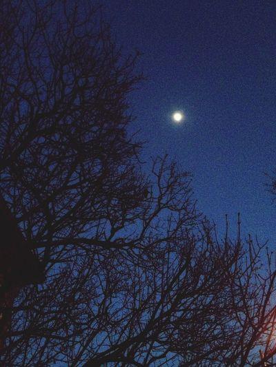 Winter Night Moonlight