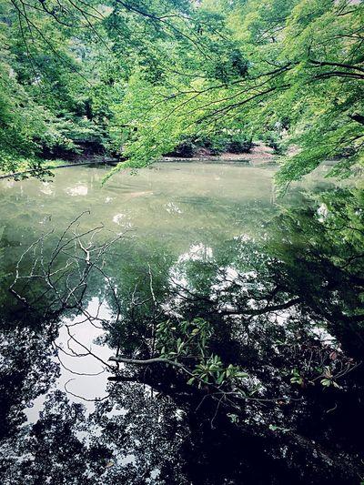 Summer Views Relaxing Hugging A Tree Water Reflection Green