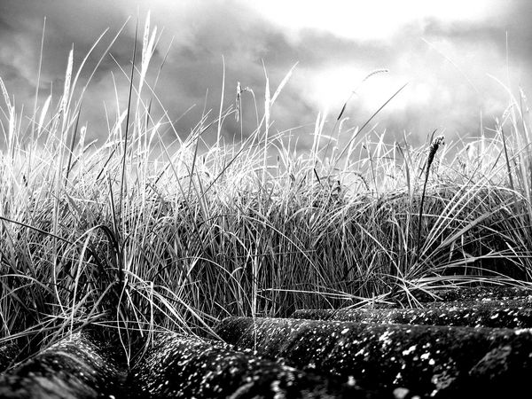 beach grasses Tranum Natural Structures Blackandwhite Ocean Beach Atmospheric Mood Still Life Backgrounds Botanical Structures In Nature Structures EyeEm Best Shots EyeEm Nature Lover EyeEm Best Shots - Black + White Water Motion Sky Close-up Grass Growing Reed - Grass Family Spread Wings Plant Life