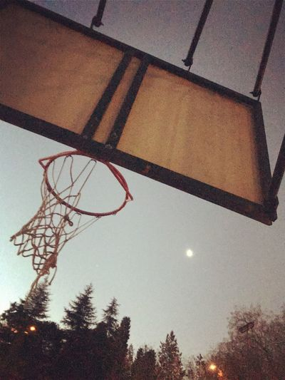 Low Angle View Tree Sky Basketball Hoop Nature Plant No People Basketball - Sport Sport Outdoors Net - Sports Equipment Shape Branch Clear Sky