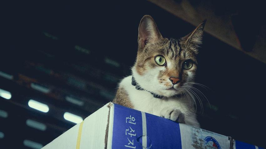 Cat Cat Lovers Cats Of EyeEm Gatto Cats Lovers  Kot Cats 🐱 Meow🐱 Neko Cat Photography Cats Chat 猫 Meow 貓 Gato Cat♡ Katze Hkcats 猫の写真 喵星人 貓星人 貓咪
