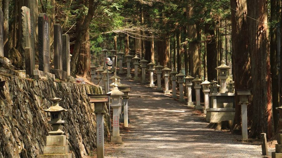 Empty footpath amidst stone lanterns at chichibu shrine