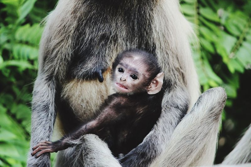 Baby monkey Animal Animal Themes Animal Wildlife Mammal Animals In The Wild One Animal Primate Monkey Focus On Foreground Day Close-up Young Animal Nature Portrait Baby Young Holding Animals In Captivity