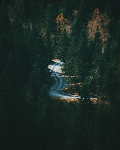 Road Simplicity Trees Green Curvy Road Landscape Nature Ground High Angle View Outdoors The Great Outdoors - 2016 EyeEm Awards Exploring Adventure Switzerland Caumasee A Bird's Eye View