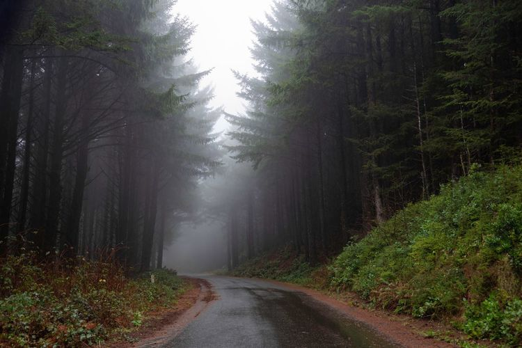 Landscape of a road leading through a foggy forest in Oregon Misty Morning Oregon Tree Plant Forest Fog Land The Way Forward Road Beauty In Nature Nature Transportation Environment Scenics - Nature Growth Tranquil Scene Non-urban Scene Autumn No People WoodLand Tranquility Direction