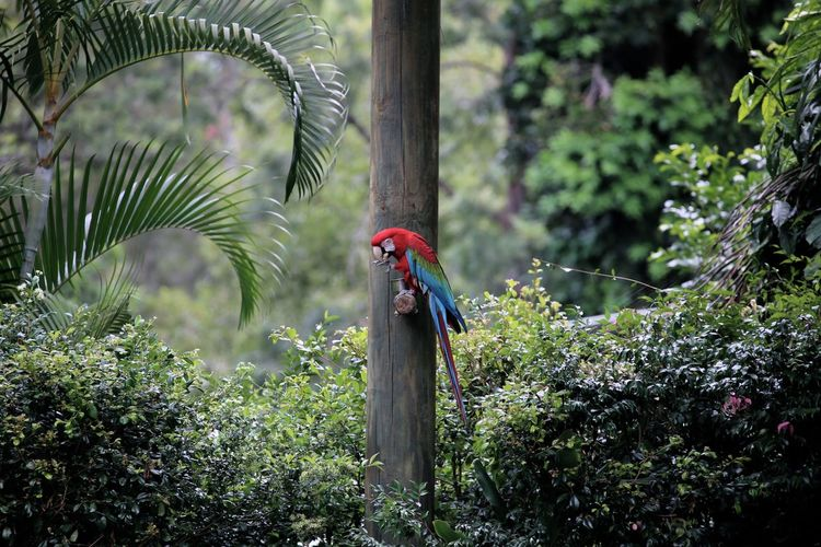Parrot Wildlife Wildlife Photography Forest Greenhouse Nature