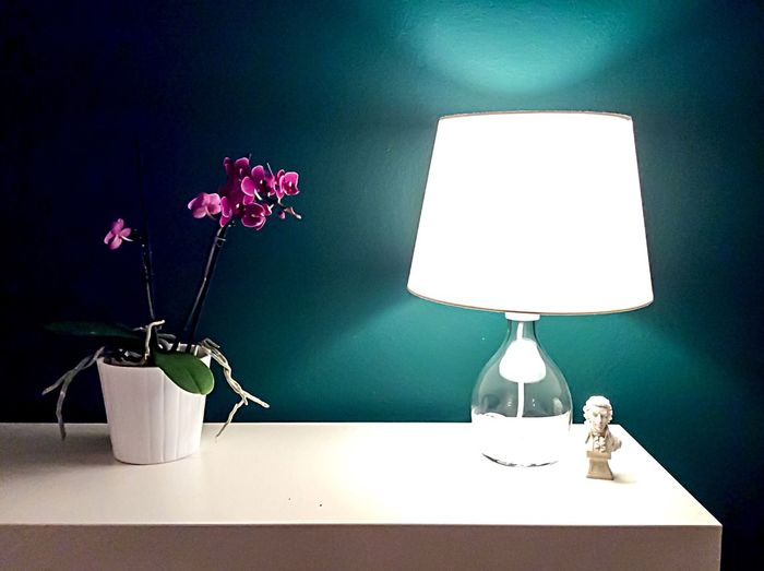 Orchids Orchid Plant Lamp Green Wall Indoors  Light And Shadow No People Home Decor Friend's Home