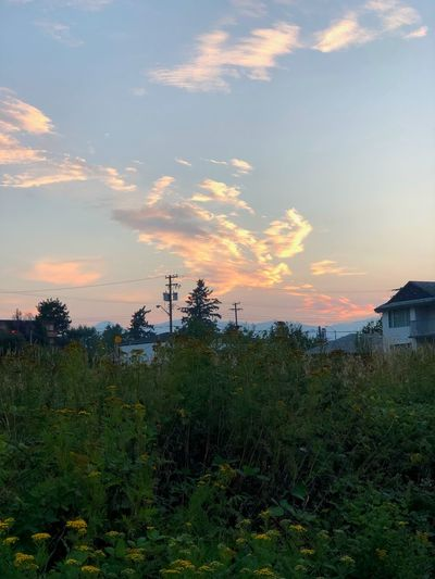 The setting for a French countryside romance novel set in the 1700s between a peasant girl and a disguised nobleman Romantic Sky Sky Sunset Cloud - Sky Plant Beauty In Nature Tranquility Growth Nature Outdoors