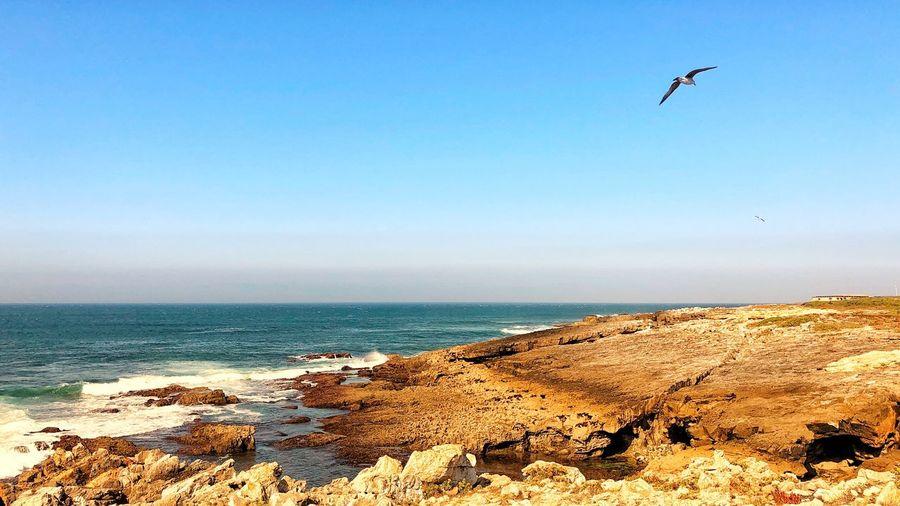 Freedom Sea Sky
