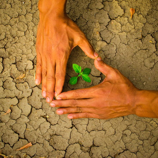 plant glowing on dry sand, Hope concept Drought Desert Hope Plant Arid Climate Barefoot Close-up Concept Cracked Day Dirt Drought Dry Glowing Hand Heart Heart Shape High Angle View Human Body Part Human Hand Lifestyles Low Section Men Nature One Person Outdoors People Real People Summer