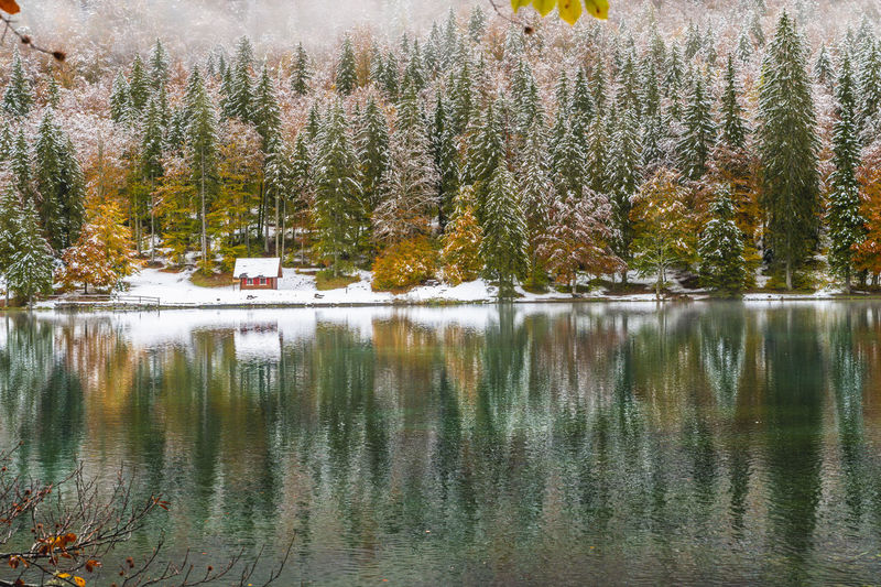 Scenic view of lake in forest during winter