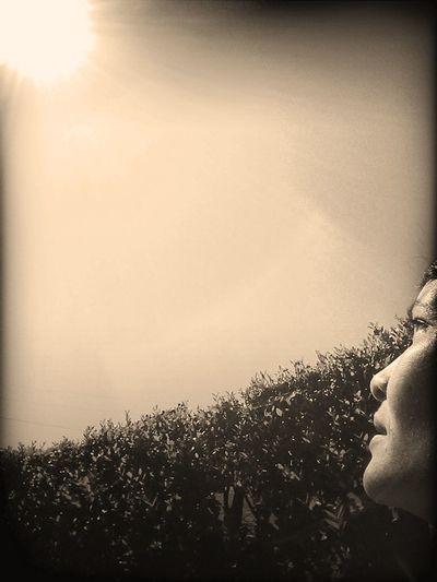 Pondering Metaphors