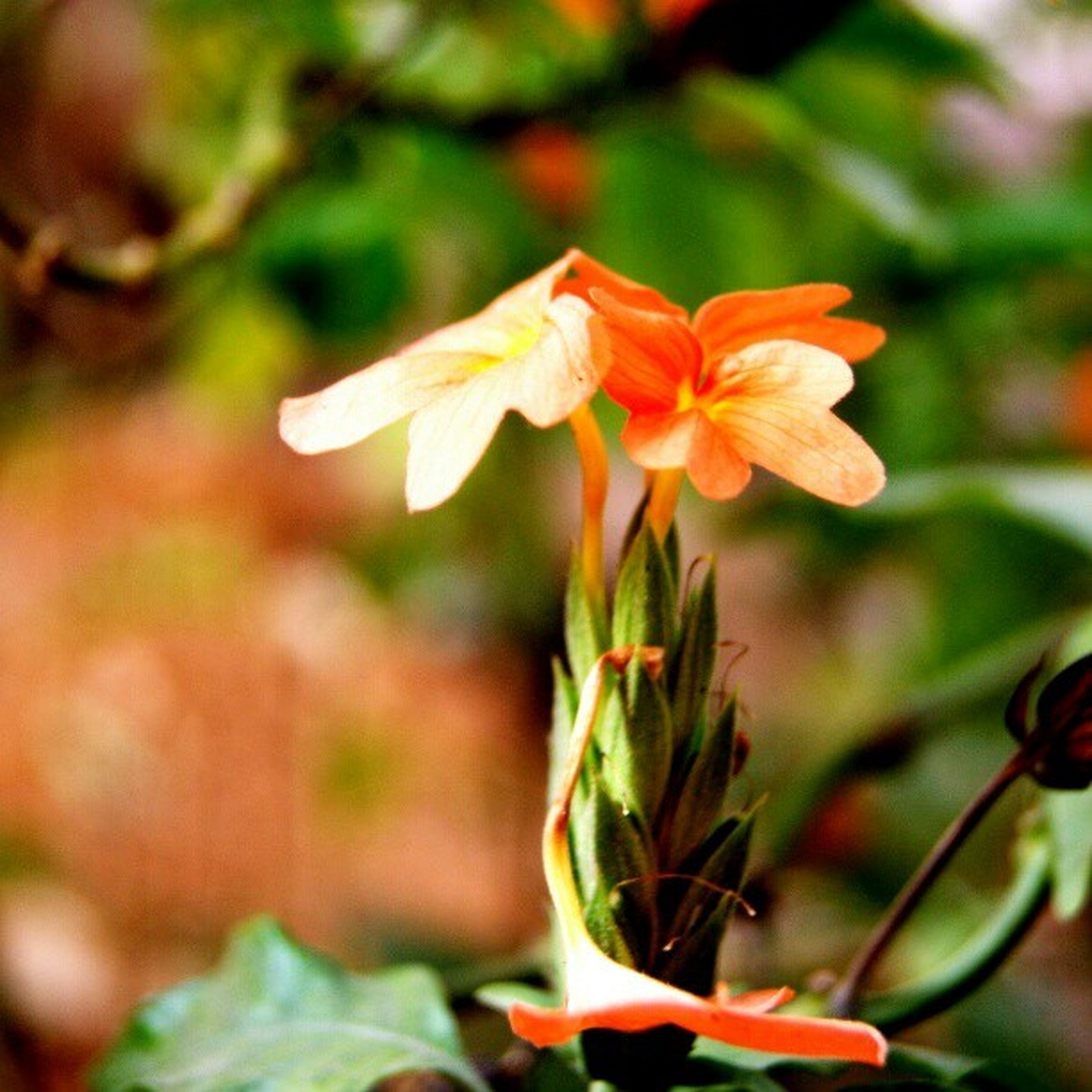 flower, petal, freshness, fragility, flower head, growth, focus on foreground, close-up, beauty in nature, blooming, plant, nature, stem, in bloom, leaf, stamen, bud, orange color, pollen, single flower