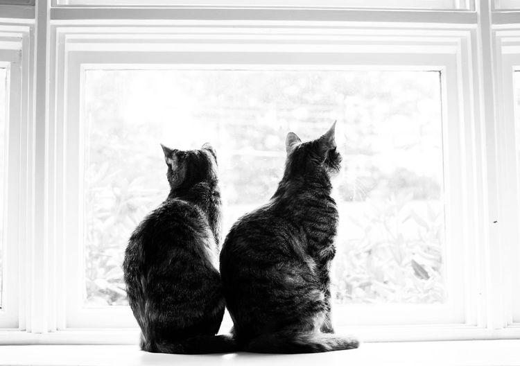 Cats sitting on window