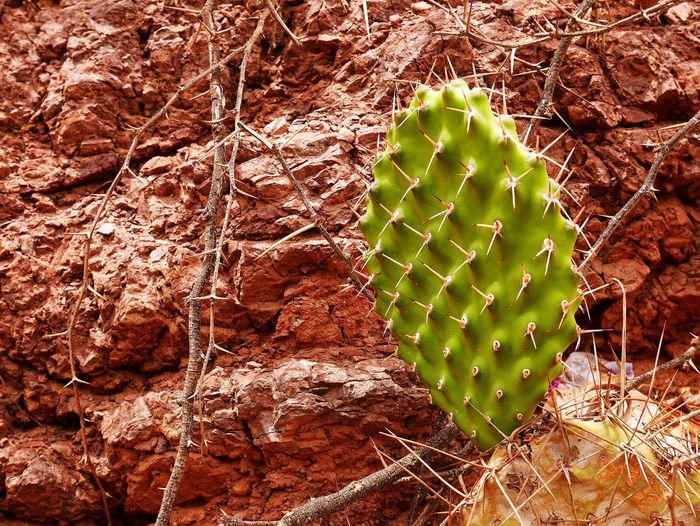 Cactus Succulent Plant Green Color Nature No People Plant Growth Thorn Day Beauty In Nature Land Rock Outdoors Sharp Spiked Rock - Object Close-up Desert Prickly Pear Cactus Solid Arid Climate Climate