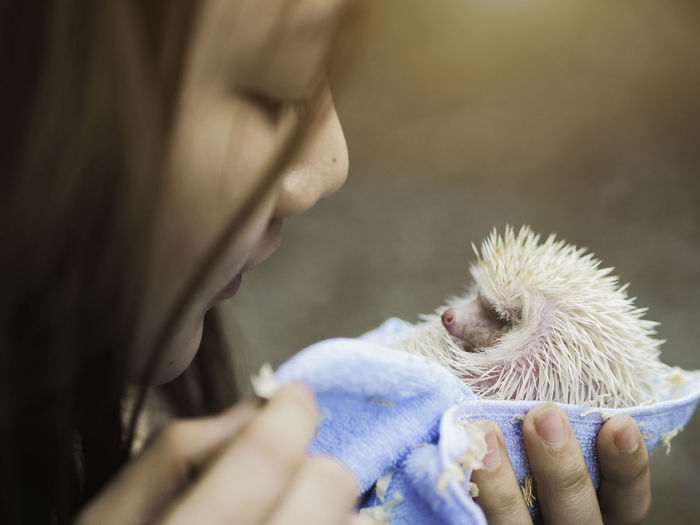 Close-up of young woman holding hedgehog