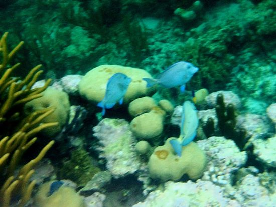 Akumal Mexico Thelifeaquatic Caribe Mexicano Caribbean Coral Reef