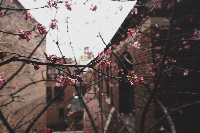 Tree Plant Branch Flower Fragility Nature Flowering Plant Focus On Foreground Vulnerability  Beauty In Nature Blossom Growth No People Day Close-up Freshness Springtime Outdoors Built Structure Cherry Blossom