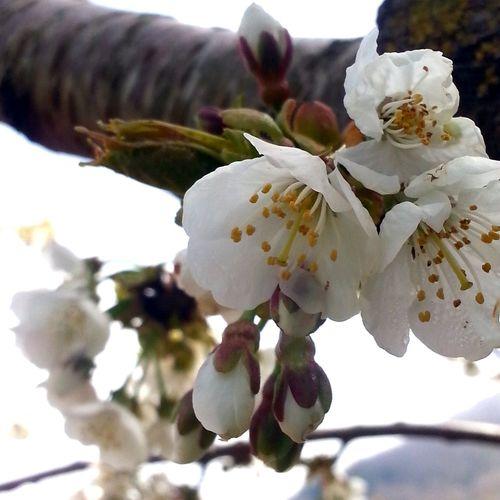 plasticosi anche loro Nature Spring Flowers Sunny Day