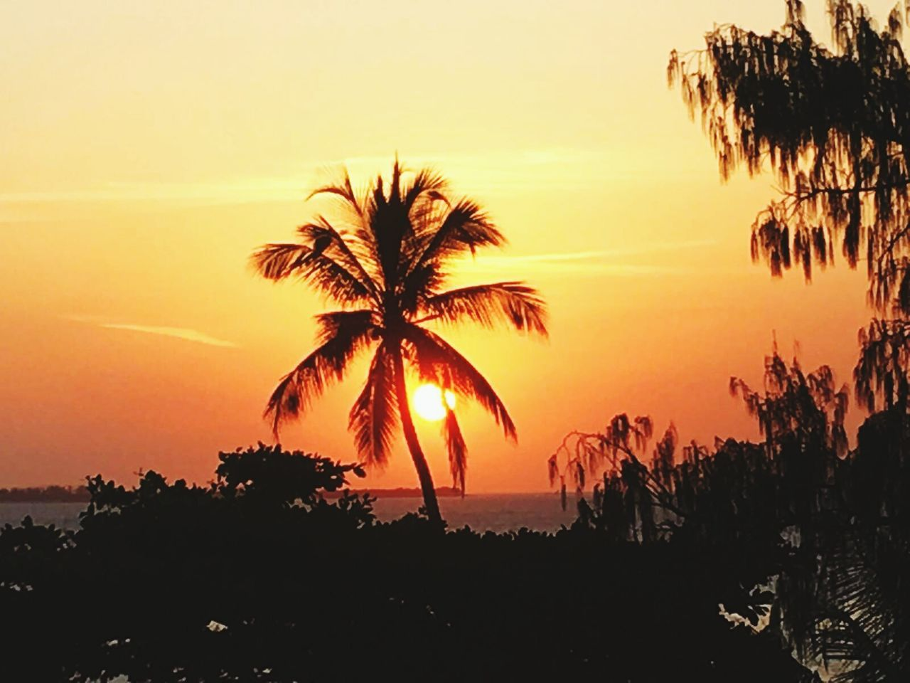 sunset, silhouette, palm tree, tree, beauty in nature, scenics, tranquil scene, nature, orange color, tranquility, sky, sun, growth, outdoors, landscape, no people, sea