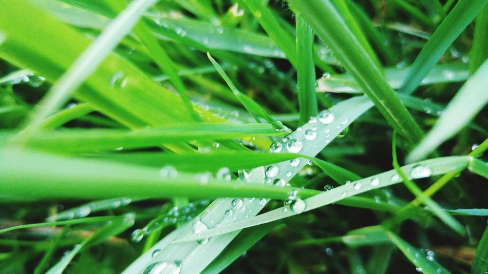 """""""Amazing how the smallest things, can have have the biggest impact.""""Taking Photos Enjoying Life Water Waterdrops Grass Blades Macro Beauty Fresh LG G4 First Eyeem Photo Mobilephotography Natute"""