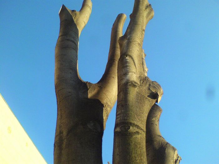 Woodlook Abstract Apstrak Creativity Eyes Look Nature Ocio Pogled Trees