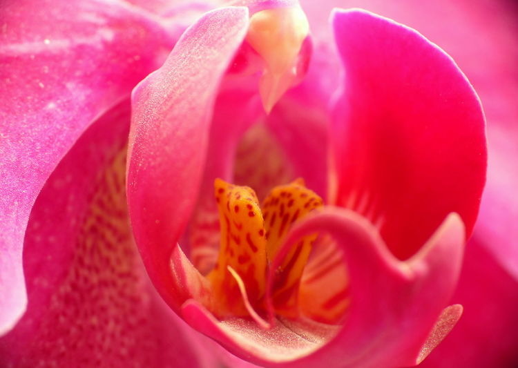 Backgrounds Beauty In Nature Blossom Close-up Detail Extreme Close-up Flower Flower Head Fragility Freshness Full Frame Growth Macro Nature Petal Pink Pink Color Pollen Rose - Flower Selective Focus Single Flower Single Rose Soft Focus Stamen Vibrant Color