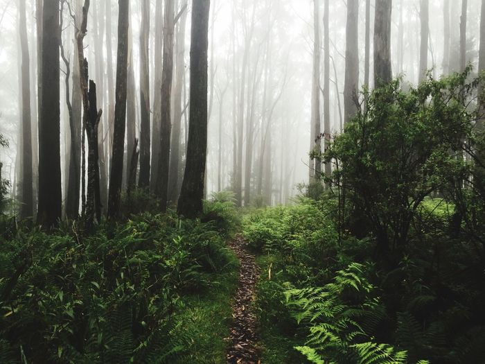 Trail amidst trees in forest during foggy weather